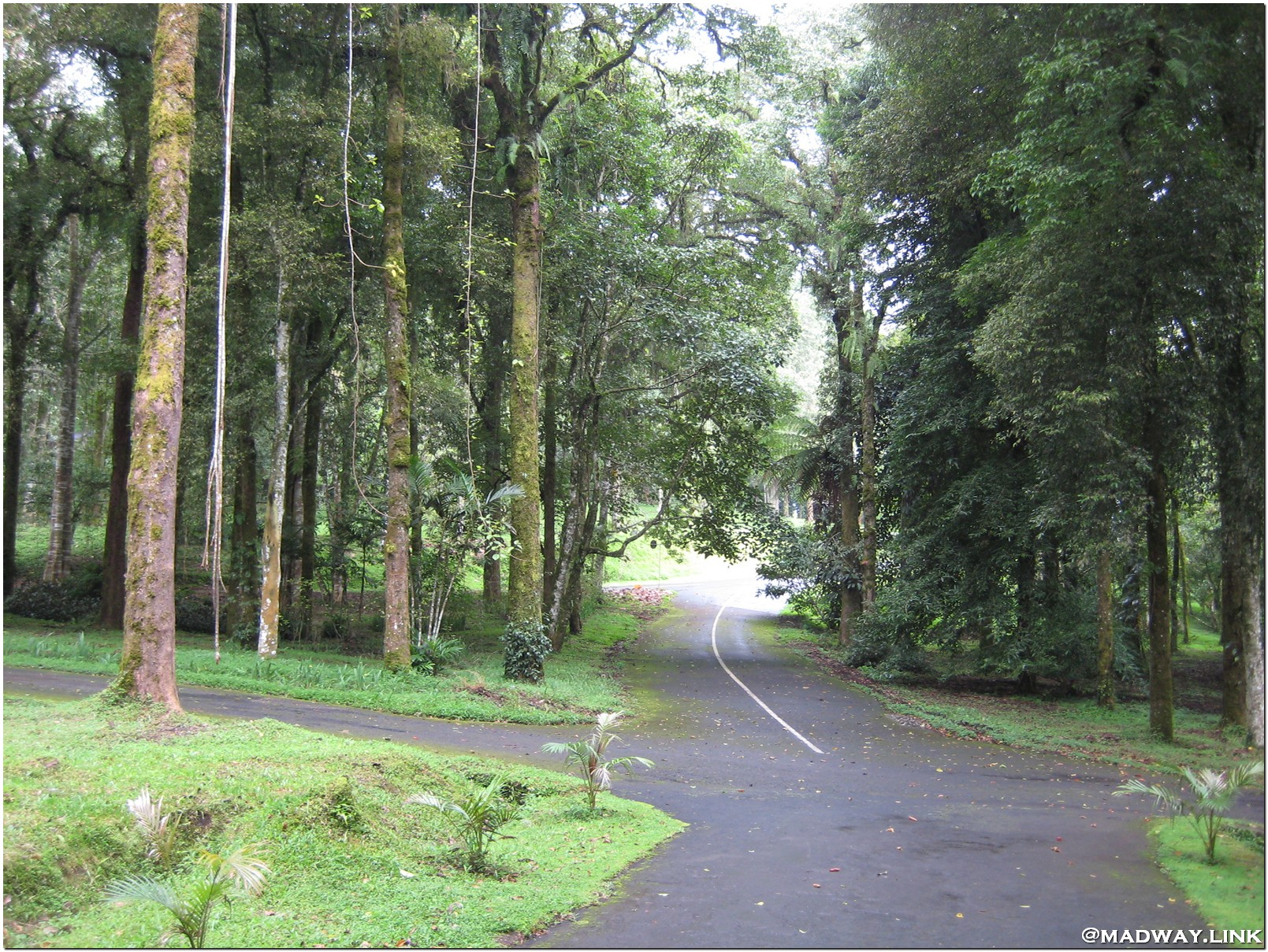 Ботанический сад на Бали фото