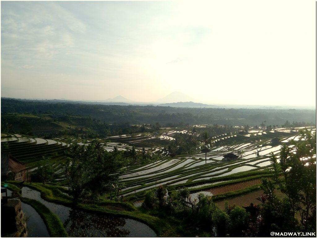 Рисовые террасы Бали фото
